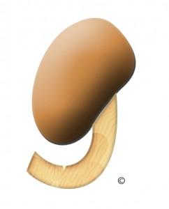 umami mushroom