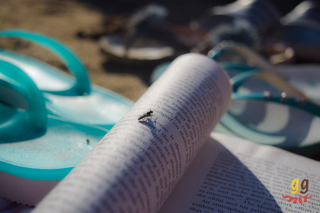 A FLY ON A BOOK WITH FLIP FLOPS IN THE BACKGROUND